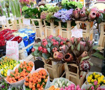 人工知能と花